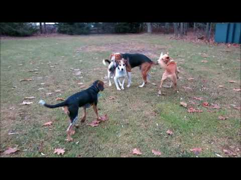 One Minute of Non-Stop Dog Action