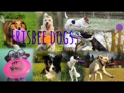 .:: 'Frisbee dogs in action' - [FULL MEP] ♡ ::.