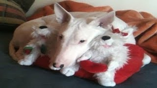 Dog ( Bull Terrier ) Toy Mother
