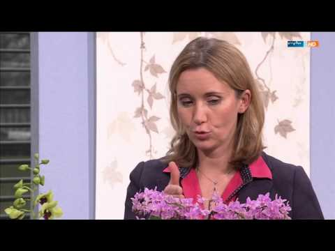 mdr mein garten mit marei karge liphard aus dem orchideengarten karge im februar 2016 mp4 youtube. Black Bedroom Furniture Sets. Home Design Ideas
