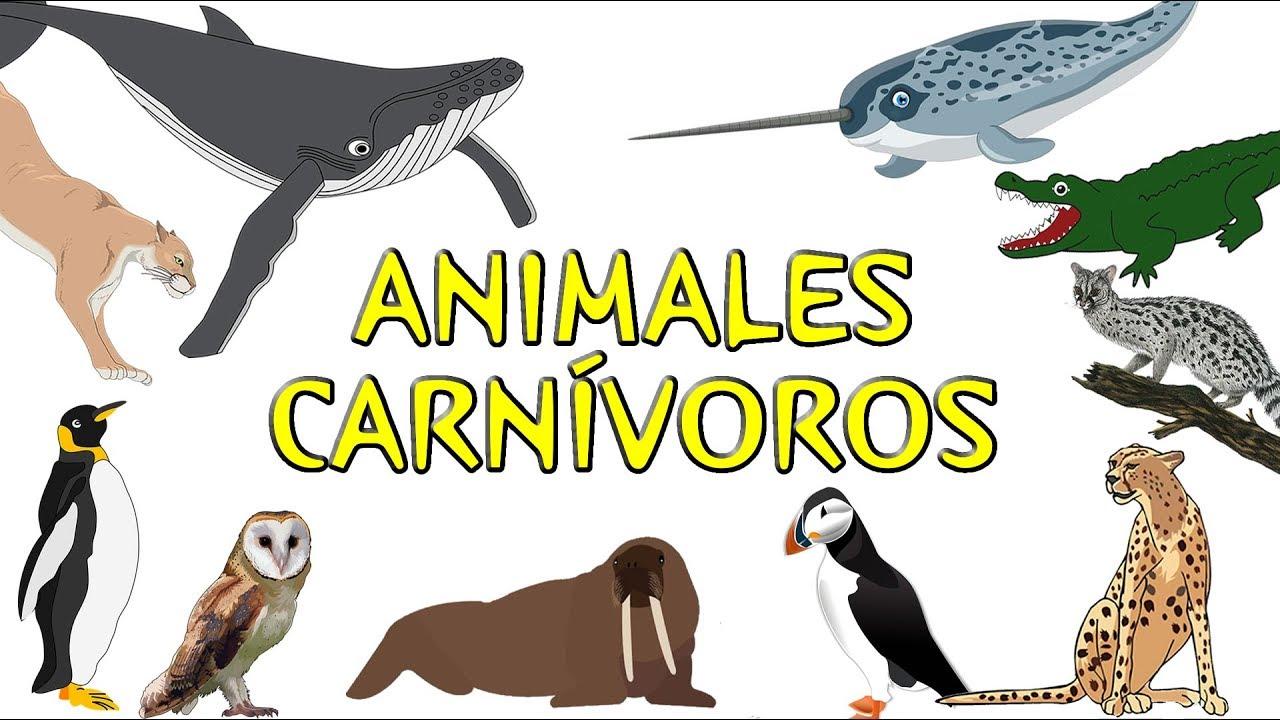 Imagenes De Animales Carnivoros Animados Www Miifotos Com