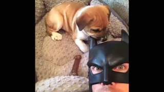 batdad revine king