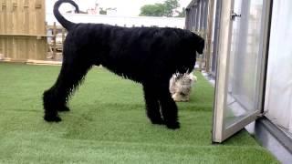 terras klaar honden blij