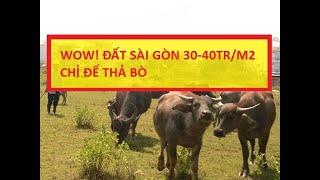 image Đất trung tâm Sài Gòn 30-40tr/m2 chỉ để thả bò