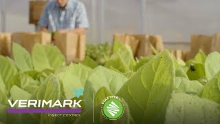 Verimark® Insect Control: Help Protect Against Tomato Spotted Wilt Virus