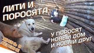 Лити и поросята // У поросят новый дом и новый друг // Жизнь в деревне