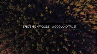 Brede High Woods - Woodland Trust Sussex