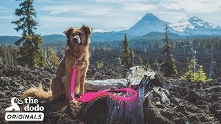 Rescue Dog Is So Excited To Go Kayaking With Her Mom l The Dodo Destination: Firsts