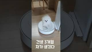로봇청소기 타는 강아지 /A dog riding a r…