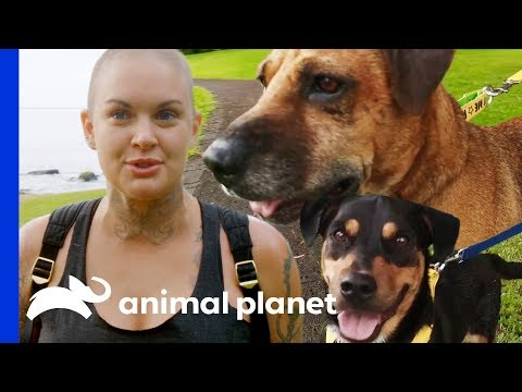 Amanda Takes 3 Adorable Rescue Dogs Out On A Field Trip | Amanda To The Rescue