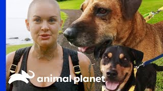 Amanda Takes 3 Adorable Rescue Dogs Out On A Field Trip   Amanda To The Rescue
