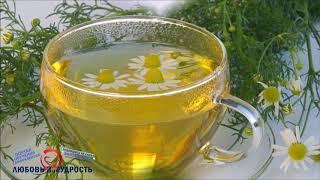 Чай с ромашкой польза и вред. Все полезные свойства ромашки для здоровья