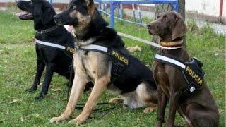 Entrenamiento de Perros Policías Parte 1  Héroes Caninos  TvAgro por Juan Gonzalo Angel