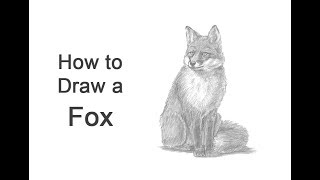 How to Draw a Fox (Sitting)