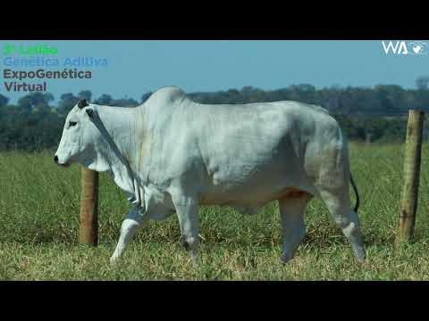 LOTE 17 - REMC A 1961 - 3º Leilão Genética Aditiva Expogenética 2020