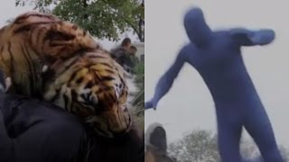 Shiva the Tiger is Actually a Man in a Blue Suit - The Walking Dead Season 7 Finale (7x16)
