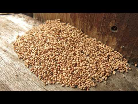 Paradise Valley Termite Inspections & Treatments | Varsity Termite & Pest Control