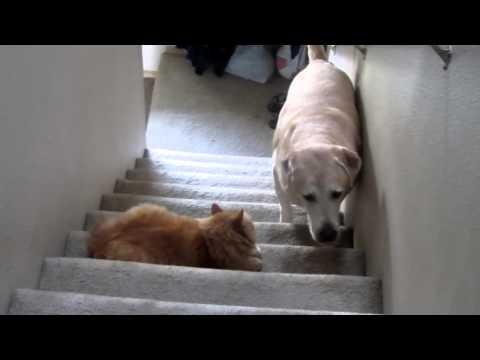 Dog afraid of cat