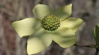 Enjoy Wildflowers and Nature in the Mts. Shasta and Siskiyou Counties. Ca.