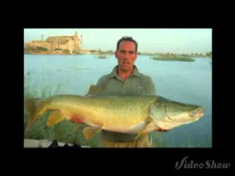 Pesci pi grandi d 39 acqua dolce del mondo youtube for Pesci acqua dolce commestibili