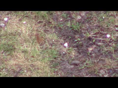 Природная аномалия в нашем дворе сегодня 3 мая. Нижнекамск.