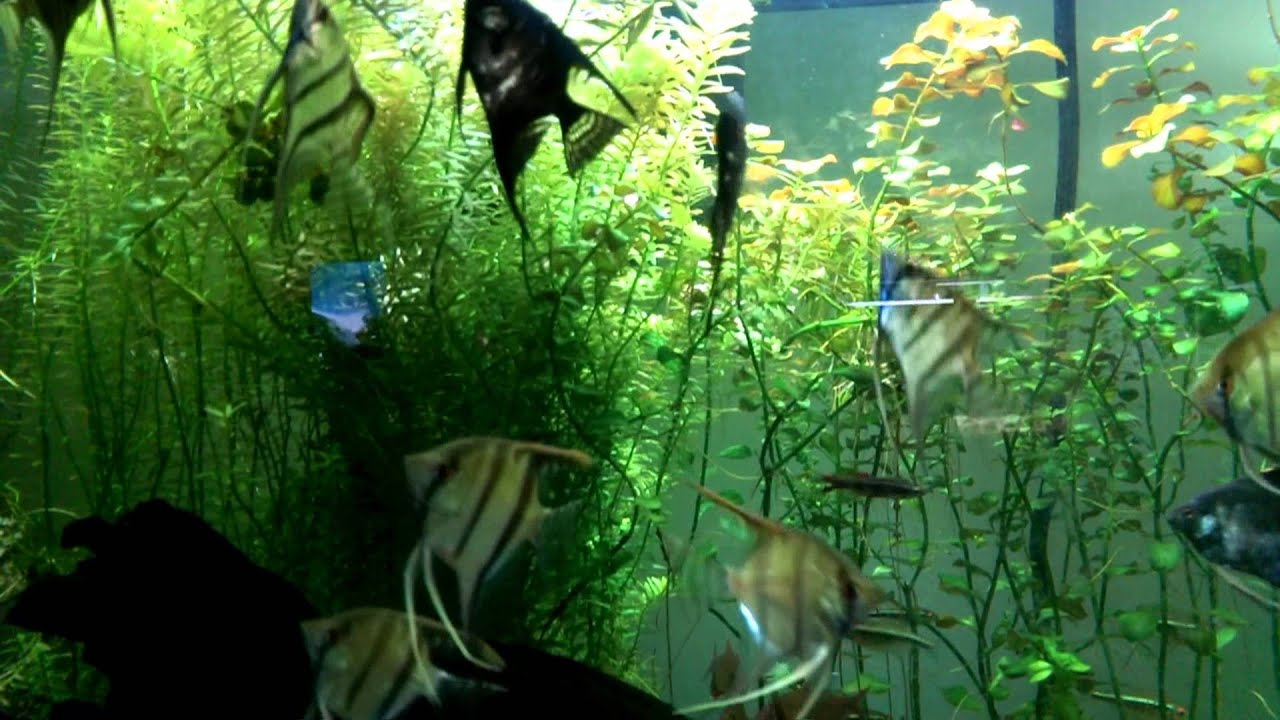 starting a fish community of your own Starting your own business can be very overwhelming so i would like  if the fish don't look good then say the  how to start an aquarium maintenance company.