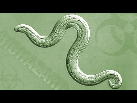 INSIGHTS ON PBS HAWAI'I: Rat Lungworm - What You Need to Know. What You Need to Do.