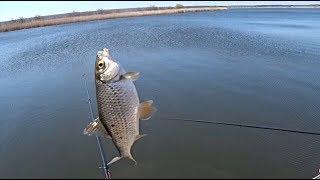 Ловля плотвы поймал отпусти Рыбалка на поплавок Fishing Ловля плотвы видео