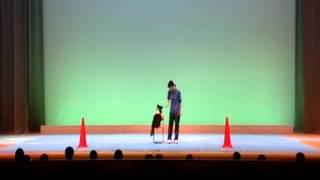 私学フェスタ2013で行われた並木学院アニマルクラス 2年 大迫萌さん 大...