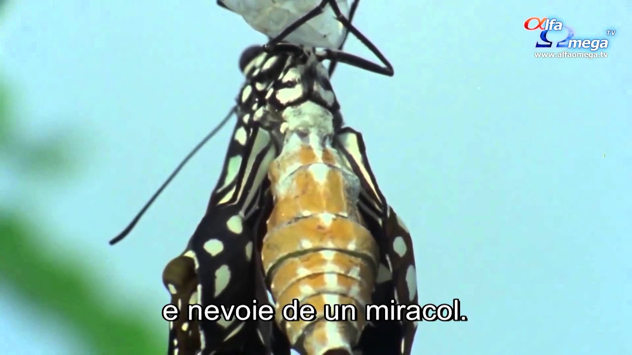TRAILER: Metamorfoza – documentar - Marți, 10 noiembrie, ora 22, la Alfa Omega TV