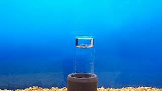 Aquaplantsonline Viyoutube Com
