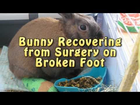 Bunny Recovering from Surgery on Broken Foot
