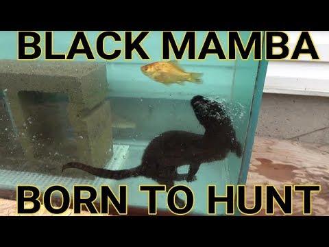 Episode 7- Diving For Aquarium Fish | Black Mamba: Born to Hunt