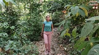Elephant Beach hidden way | havelock | radhapur beach | trekking to elephant beach | Andaman tour