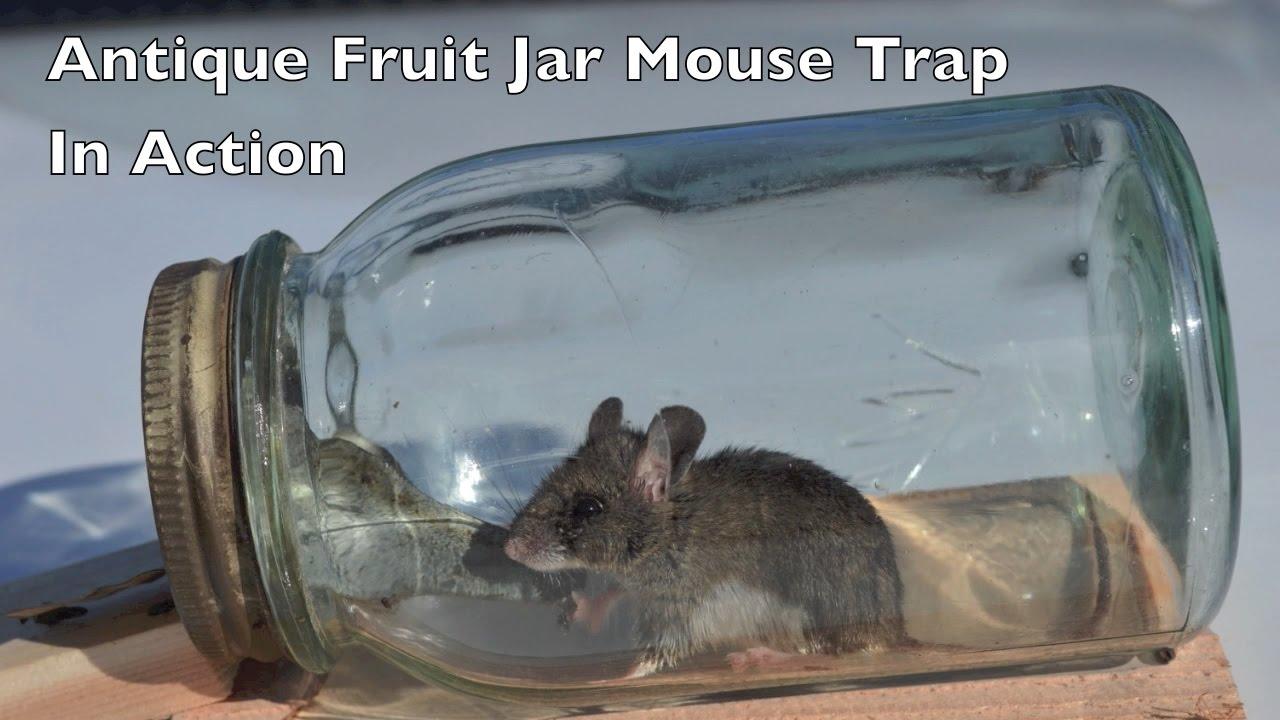Antique Fruit Jar Mouse Trap In Action  Mouse Trap Mondays