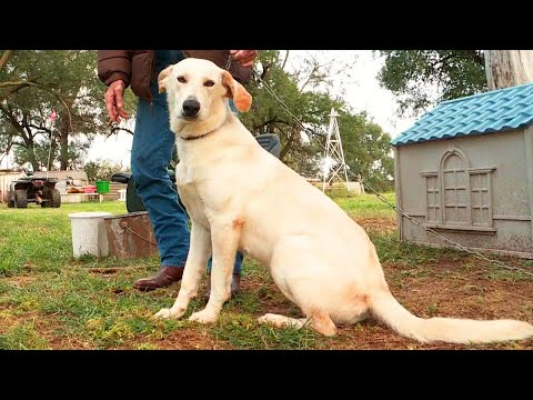 Protection Dog - Dogs protecting Pregnant Women Videos | Dog protects babies in womb from YouTube · Duration:  3 minutes 24 seconds