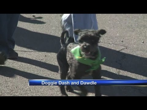 Doggie Dash And Dawdle, Helping Canines