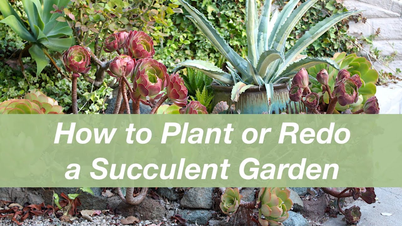 How To Refresh An Overgrown Succulent Garden