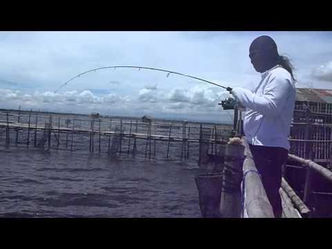 Bangus Fishing Using A 4 Lbs Test Line.