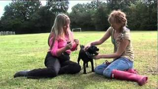 How To Stop Your Dog From Eating Poo With Sharon Bolt From Good Dogs!