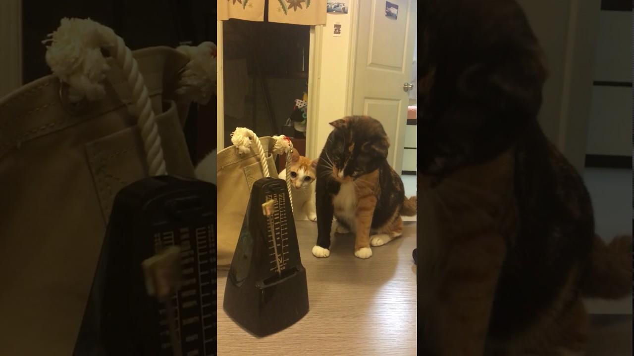 Cats vs Metronome