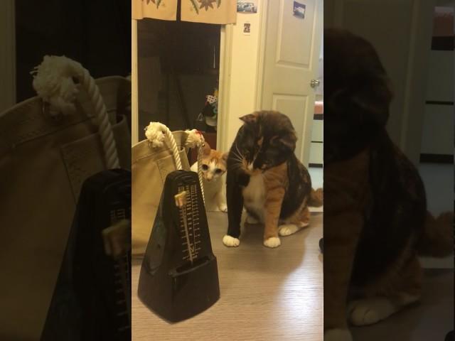 Cats vs. Metronome (LOL!!!)