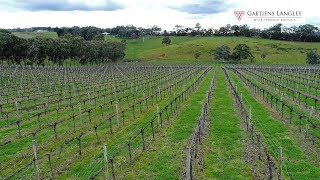 Vineyard & Cellar Door Opportunity - Adelaide Hills thumbnail