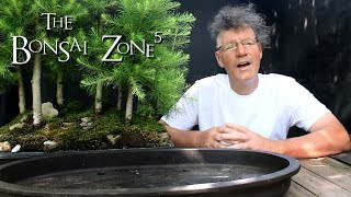 Big Changes to the Larch Forest, The Bonsai Zone, July 2018 - Stafaband