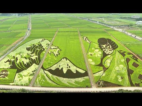 شاهد | منطقة يابانية تحوّل حقول الأرز فيها إلى لوحات فنية خضراء …  - 23:54-2021 / 7 / 30