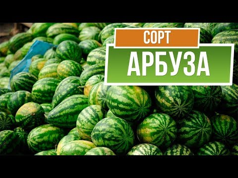 Лучшие сорта арбуза для средней полосы ✔️ Какие Арбузы Посадить в России | сорта_2019 | средней | гибриды | арбузов | полосы | лучшие | гарден | арбузы | арбуза | сорта