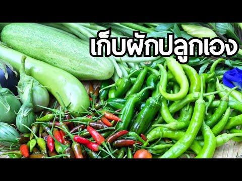 เก็บผักไทยในญี่ปุ่น - วันที่ 10 Jul 2017