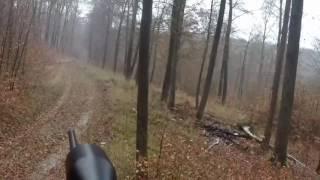 Drückjagd 2016 drivenhunt wildboar Sau wird erlegt