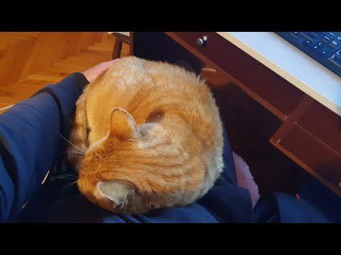 Cats Love Jumping Into Their Dad's Lap
