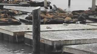 Seals at Fisherman